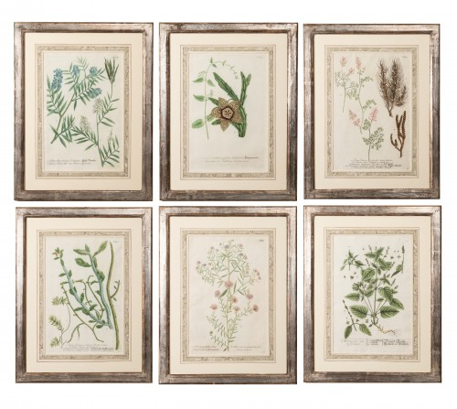 Six framed engraved botanical prints by William Curtis