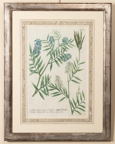 Six framed engraved botanical prints by William Curtis - Engravings & Prints Style Louis XV