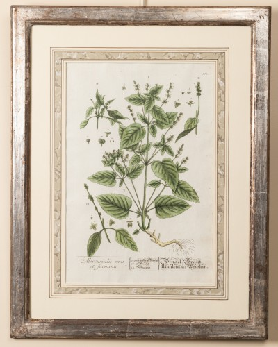 Engravings & Prints  - Six framed engraved botanical prints by William Curtis