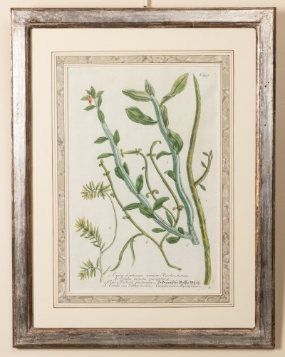 Six framed engraved botanical prints by William Curtis -