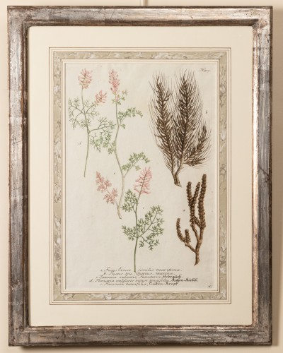 18th century - Six framed engraved botanical prints by William Curtis