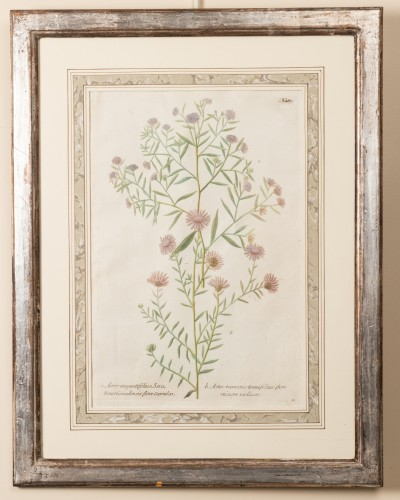 Six framed engraved botanical prints by William Curtis - Louis XV
