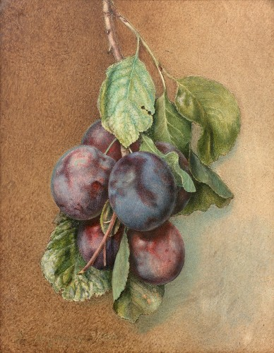 Flora REYNARD (c. 1802-1849) - Bunch of plums