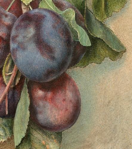 Flora REYNARD (c. 1802-1849) - Bunch of plums - Paintings & Drawings Style Louis-Philippe