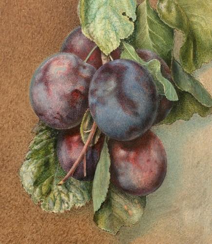 Paintings & Drawings  - Flora REYNARD (c. 1802-1849) - Bunch of plums