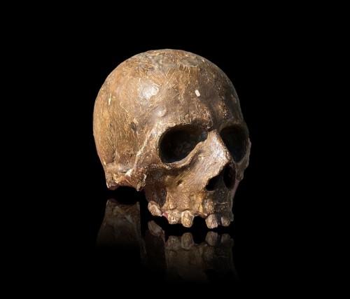 A Memento Mori skull.Germany.17th century. - Curiosities Style