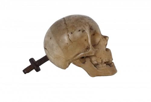 Italian Memento Mori skull -  XVII century