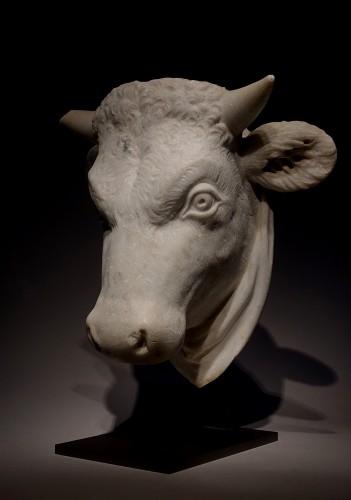 Head of a Bull -