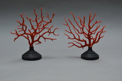 Pair of Coral Branches  - Curiosities Style