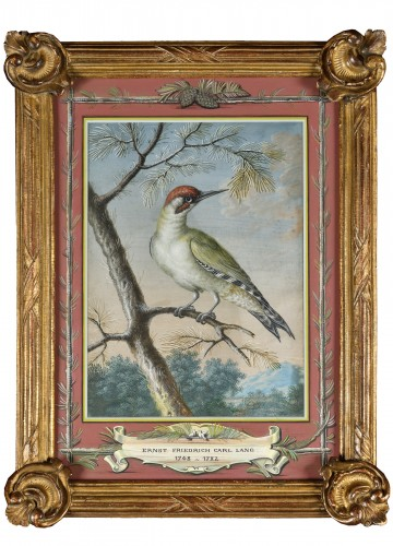 Green wooodpecker - Ernst Friedrich Carl Lang (1748-1782)
