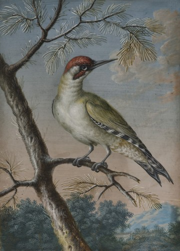 Green wooodpecker - Ernst Friedrich Carl Lang (1748-1782) - Paintings & Drawings Style