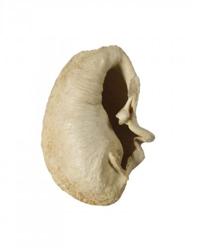 Whale Inner Ear Bone