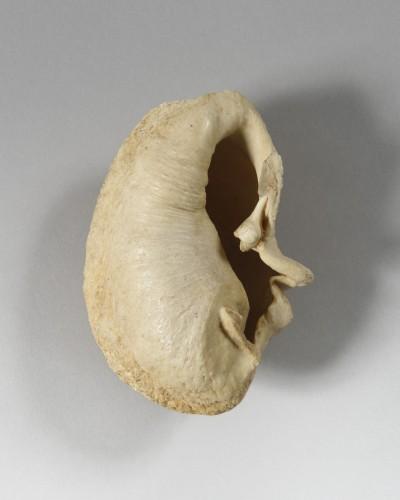Curiosities  - Whale Inner Ear Bone