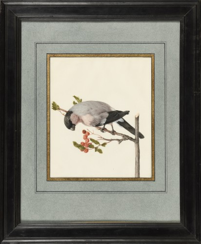 Karl Wilhelm of Hamilton 17th/18th century - Peony bullfinch