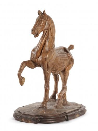"Horse ""écorché"" in terracotta 18th century"