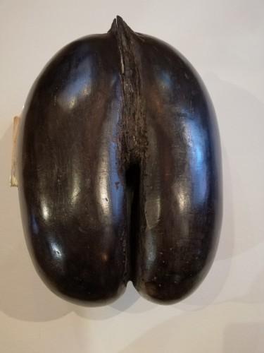 Curiosities  - Objet de curiosité Coco-buttocks