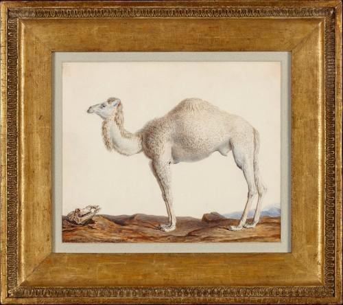 Nicolas Maréchal (1753 -1803), a Dromedary - Paintings & Drawings Style Empire