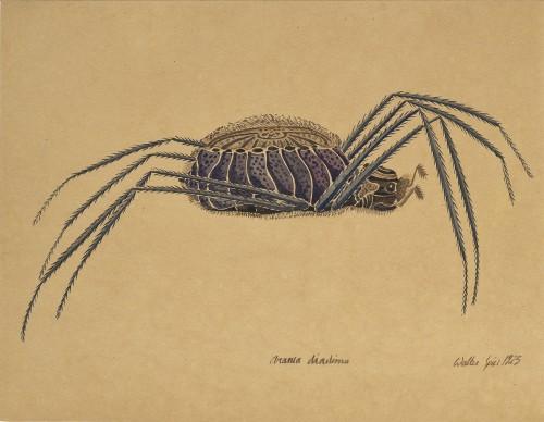 Aranea diadima, a watercolor Walter Spies (Moscow 1895 - Indian Ocean 1942)