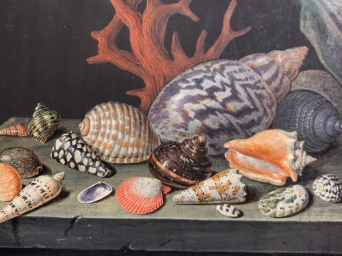 Paintings & Drawings  - A shell and coral still-life - Elisabeth Christina Matthes (1749-1808)